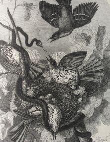 Detail of print