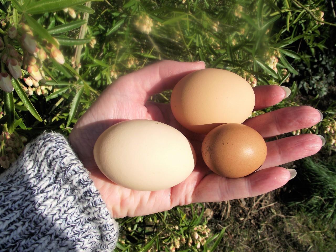 Eggs big anf small