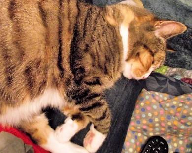 Sleepy Socks